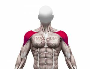 Pike Push-ups Primary Muscles Used - Front