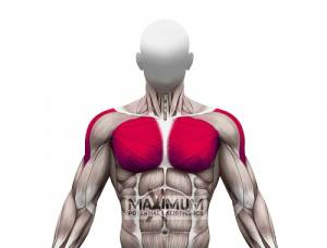 Pike Push-ups Secondary Muscles Used